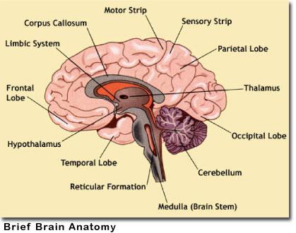 brainmetastasis2