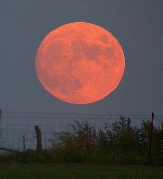 harvest_moon_2